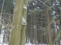 Takový normální strom s pindíkem